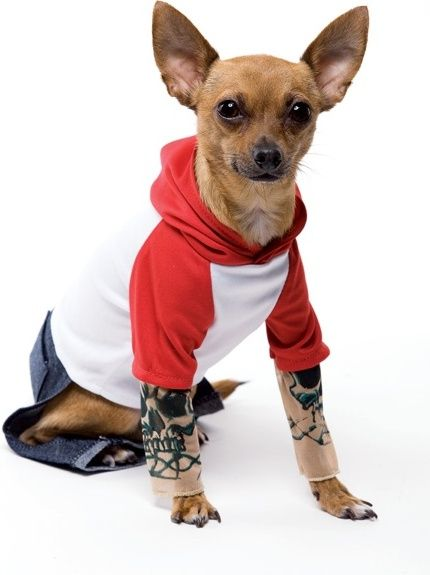 Tattted Sleeves For Your Dog Tattoo Dog Pet Costume Product
