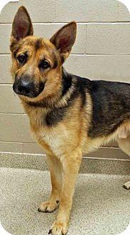 Shorewood Il German Shepherd Dog Mix Meet Adopted Riker A