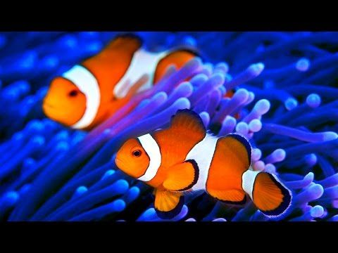 musique relaxation poisson