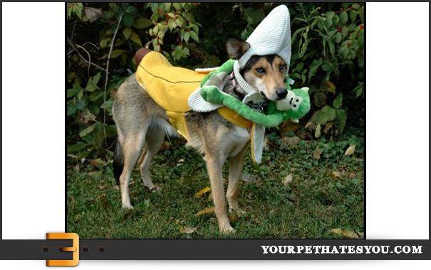 Big Banana Dog Costume Pet Supermarket Pets Dogs