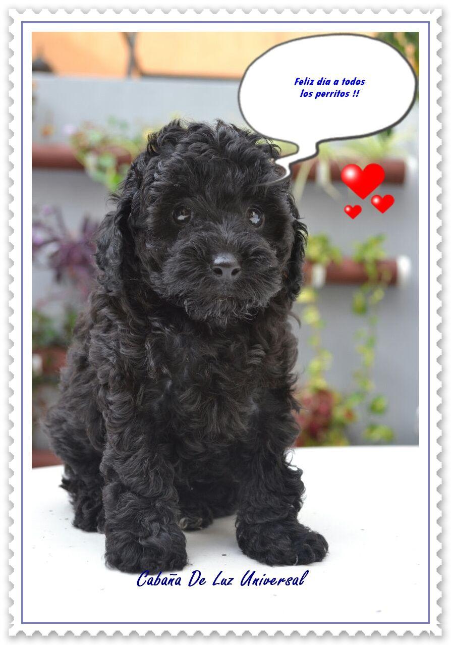 Feliz día del Perro!!!! #CanichesToy #Cachorros