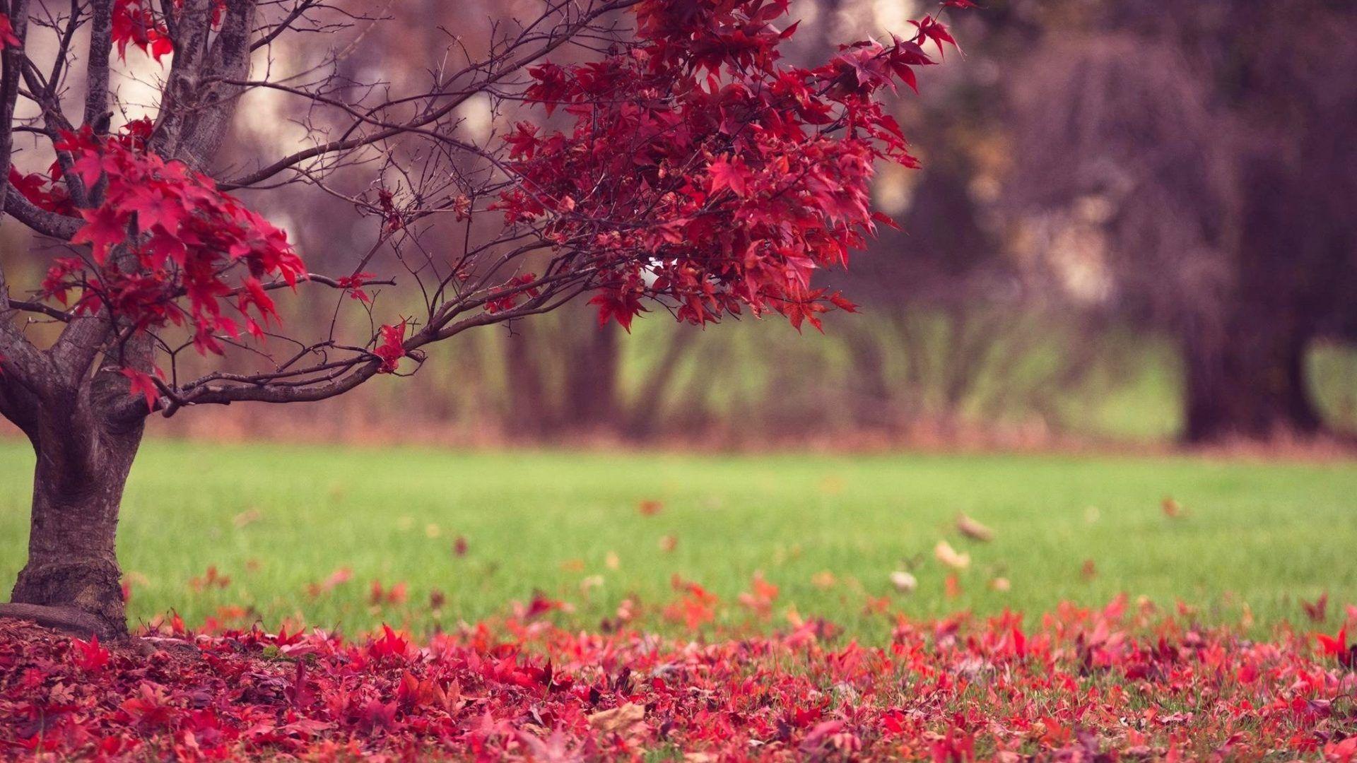 Desktop Wallpaper Hd Full Screen Nature In 2020 Desktop Wallpaper Full Screen Nature Desktop Wallpaper Hd Nature Wallpapers