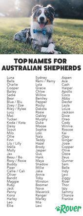 Die Top Namen Fur Aussies Und Australian Shepherd Puppies Aussies Australian Hashtags Australian Shepherd Welpen Australian Shepherd Hundenamen