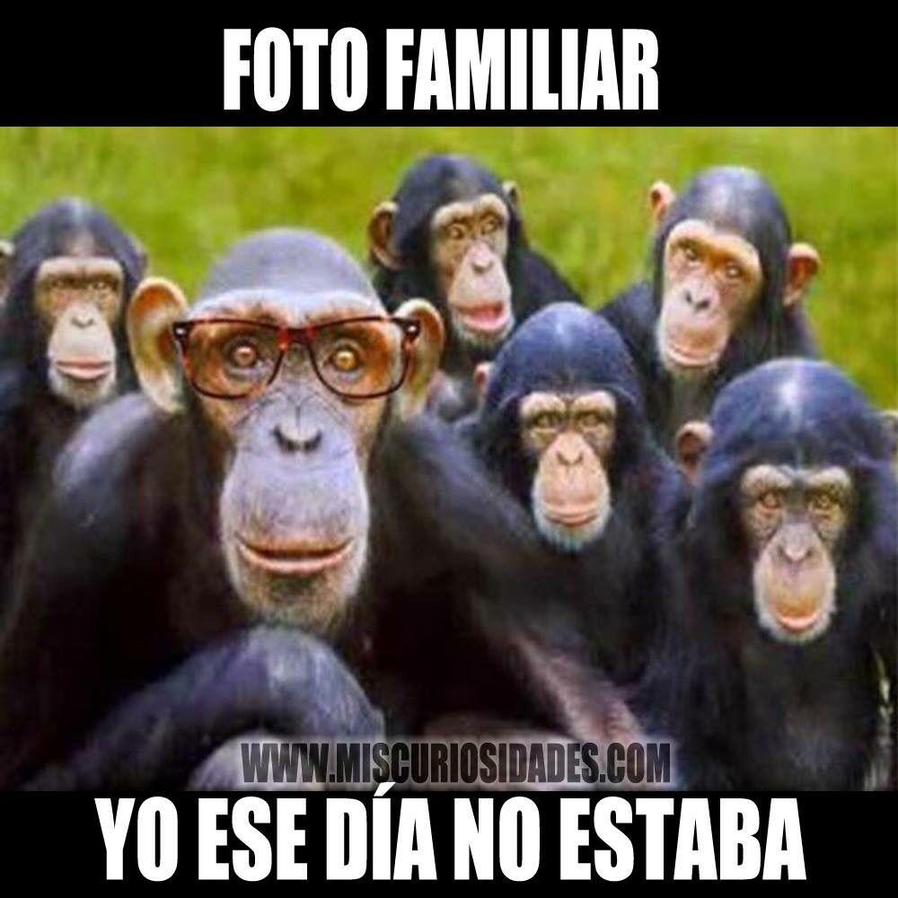 Foto Familiar Fotos De Monos Graciosos Monos Divertidos Feliz Lunes Gracioso