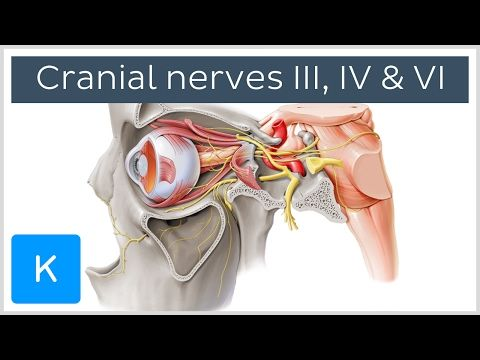 YouTube | Anatomy | Pinterest | Abducens nerve