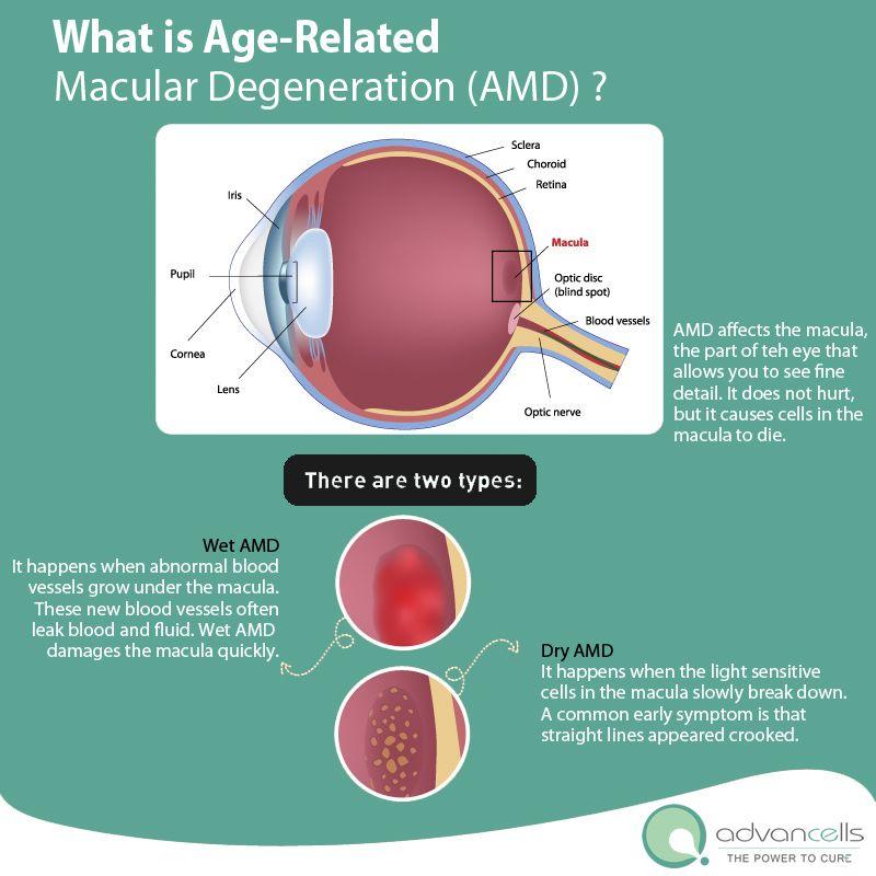 Cell research autologous adult stem treatment