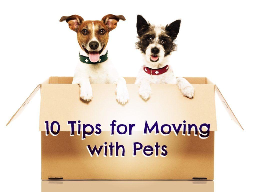 Moving With Your Pets What Ot Know Moving Tips Pets Your Pet