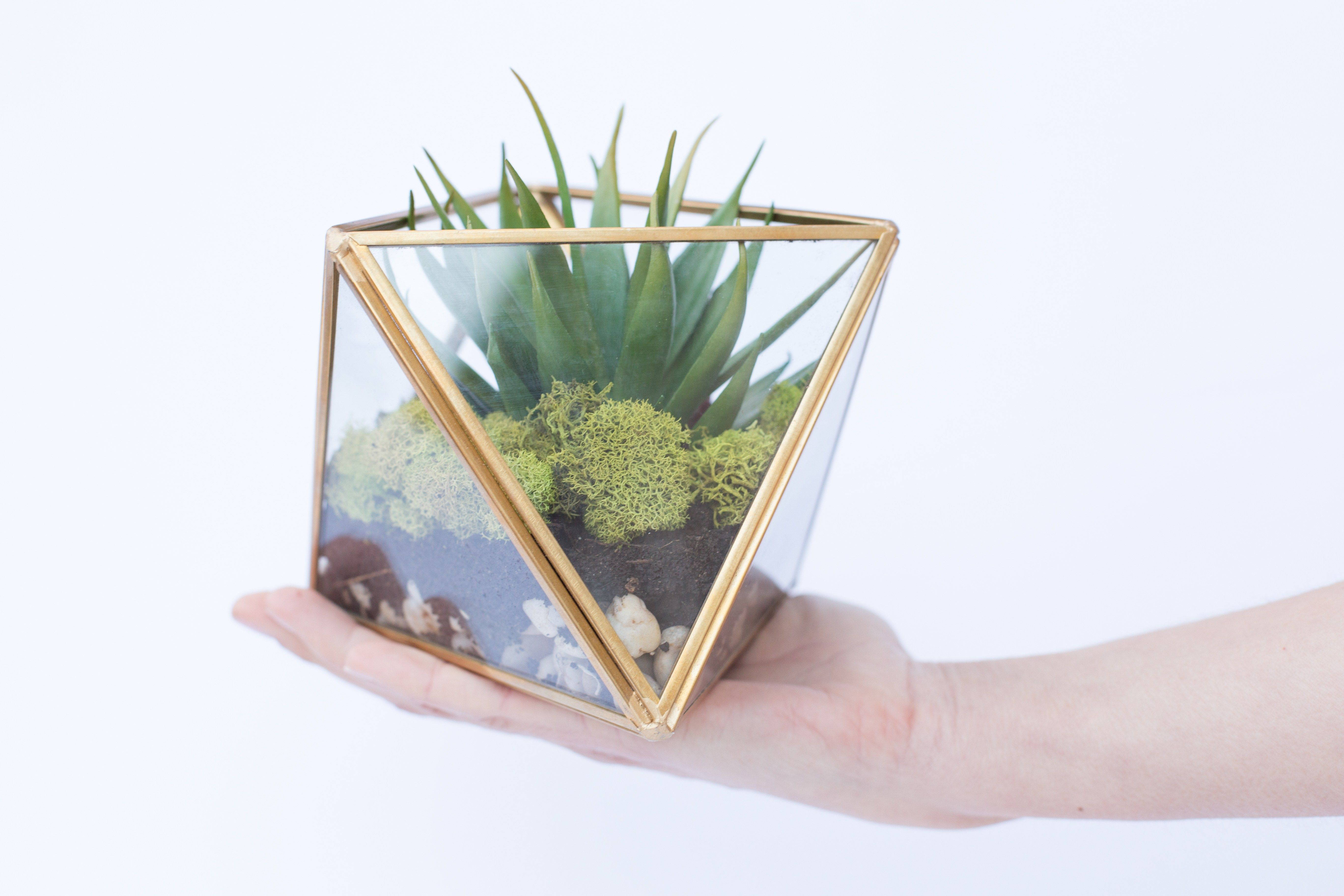Diy Terrarium Art Of Everyday Living Terrarium Diy Diy Succulents Diy