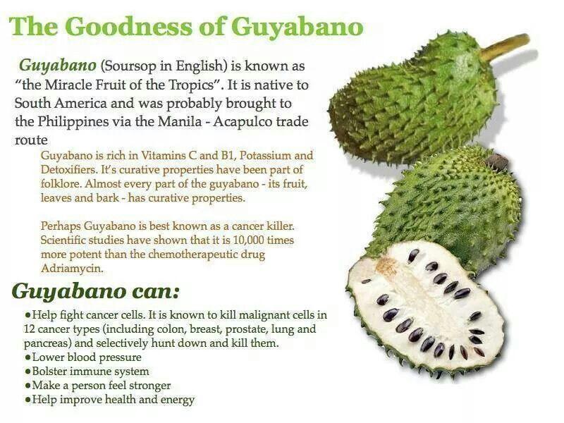 The importance of guyabano