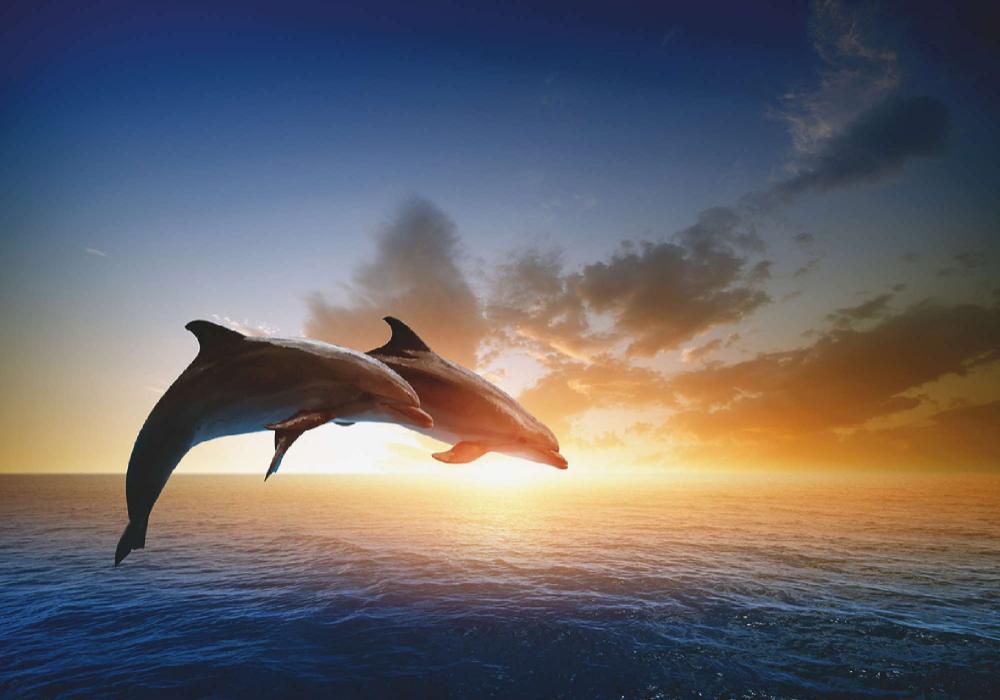 Unknown Springendes Delfin Paar Bei Schonem Sonnenuntergang Wandbilder Selbstklebend Jetzt Entdecken Bei Www Artgalerie Bildersh Ausmalen Bilder Bild Shop