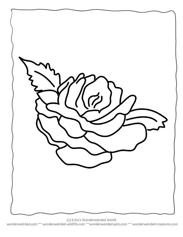 Flower Coloring Sheets Rose Wonderweirded Wildlife Free Printable Pages