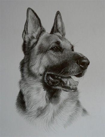 Julie Rhodes Commissioned Pet Portraits Http Www