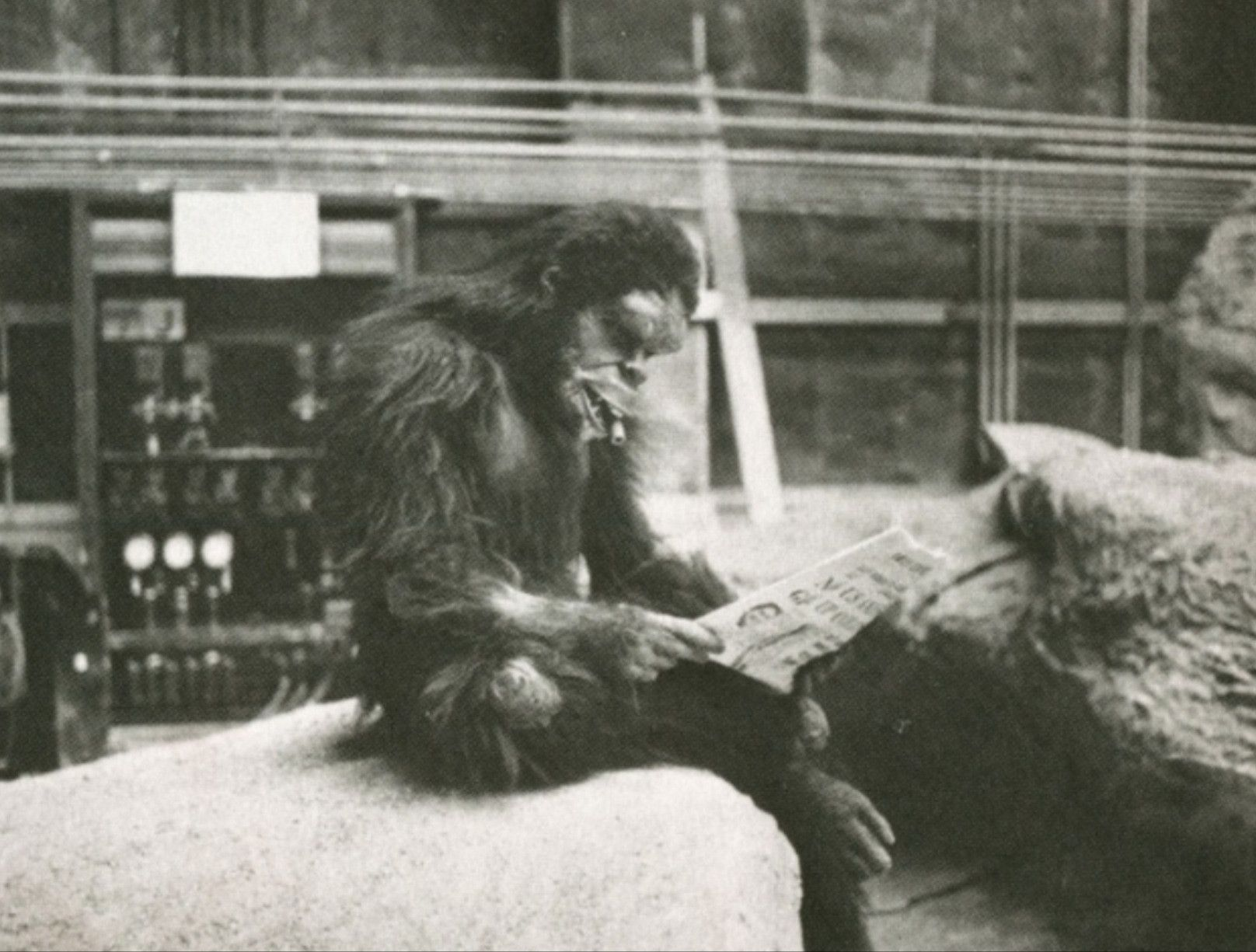 Actor In Ape Costume Enjoying The Paper Backstage Of 2001 A Space Odyssey 1960 S Iconic Movies Scene Photo Movie Photo