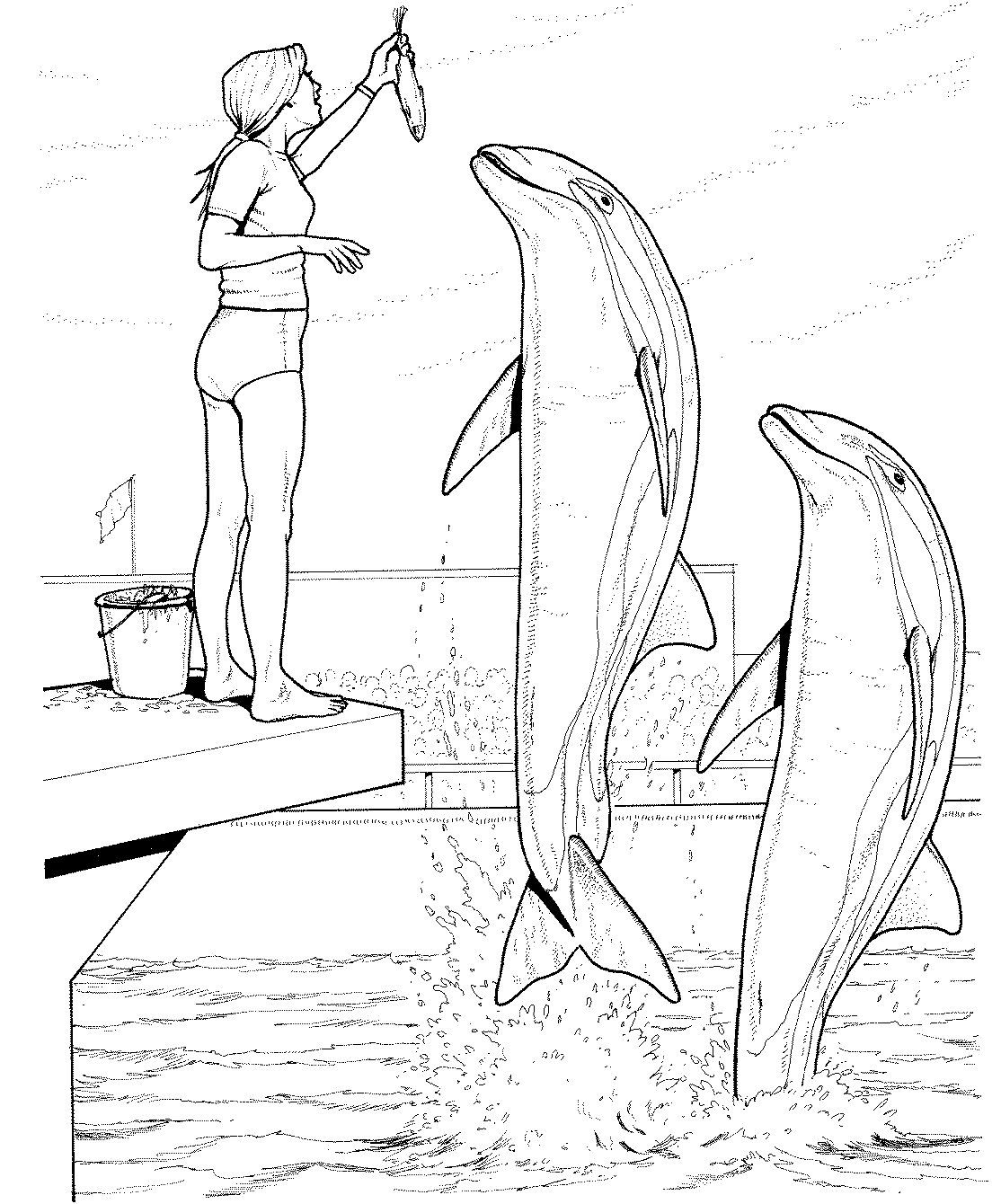 Pin Van Juf Petra Op Thema Dolfijnen Kleuters Dolphin Tehem Preschool Dolfijnen Dieren Vissen