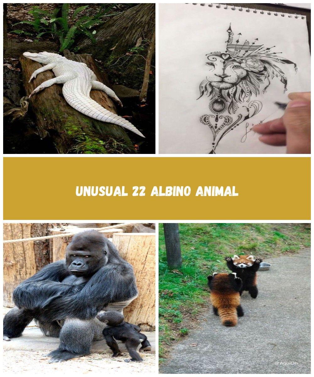 Click for Unusual 22 Albino Animal  #AlbinoAnimal##Albino#Animal#amazing #amazinganimals animals beautiful Unusual 22 Albino Animal #albinoanimals