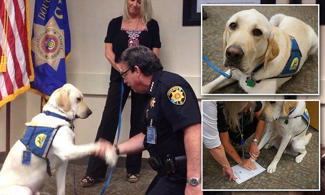 Dog Gets Sworn In As K9 Victim Assistant Dog By Colorado Police