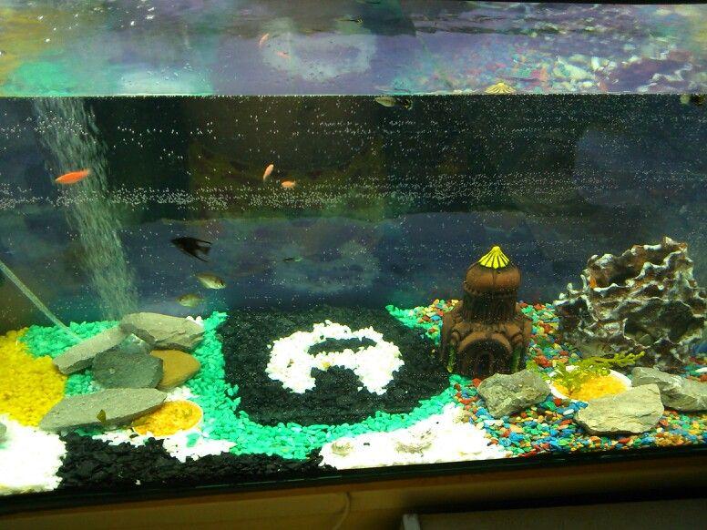 My first aquarium (240 litres)