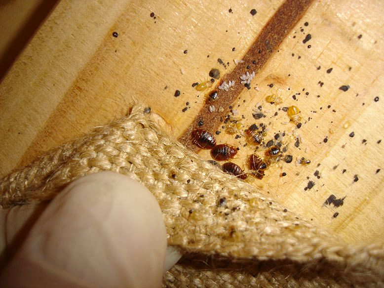 Killing Super Bed Bugs
