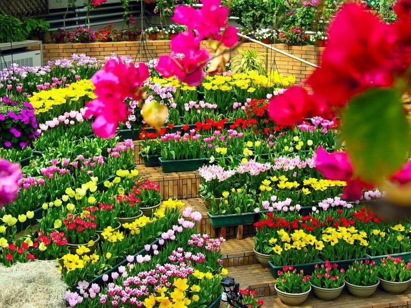 Como diseñar el jardín con macetas de diferentes formas plantas y