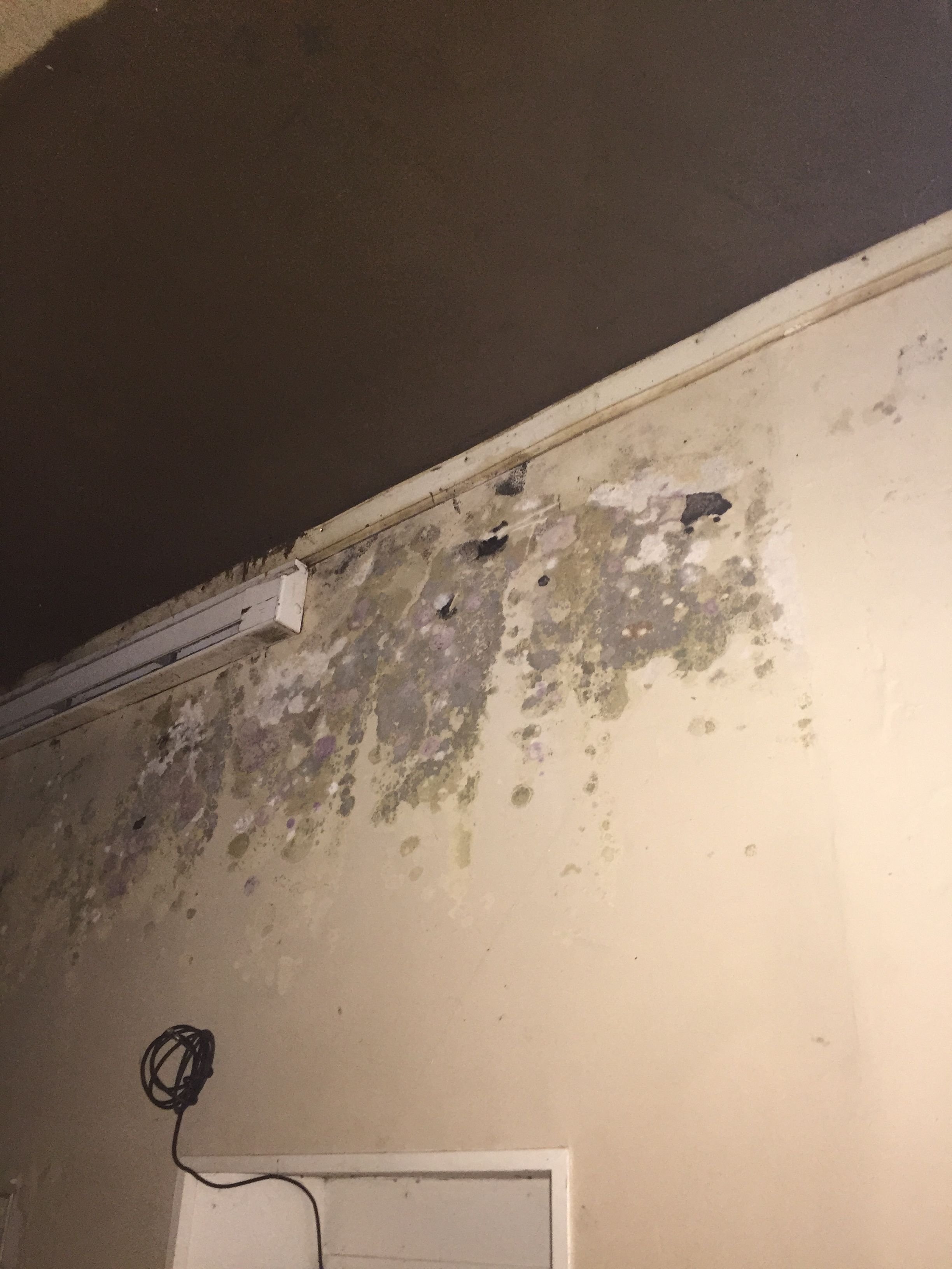 Professional Mold Testing Contractors (With images
