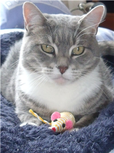Tia Likes Human Company And Is Looking For A Permanent Lap To Sit On Cat Adoption Pet Adoption Feline