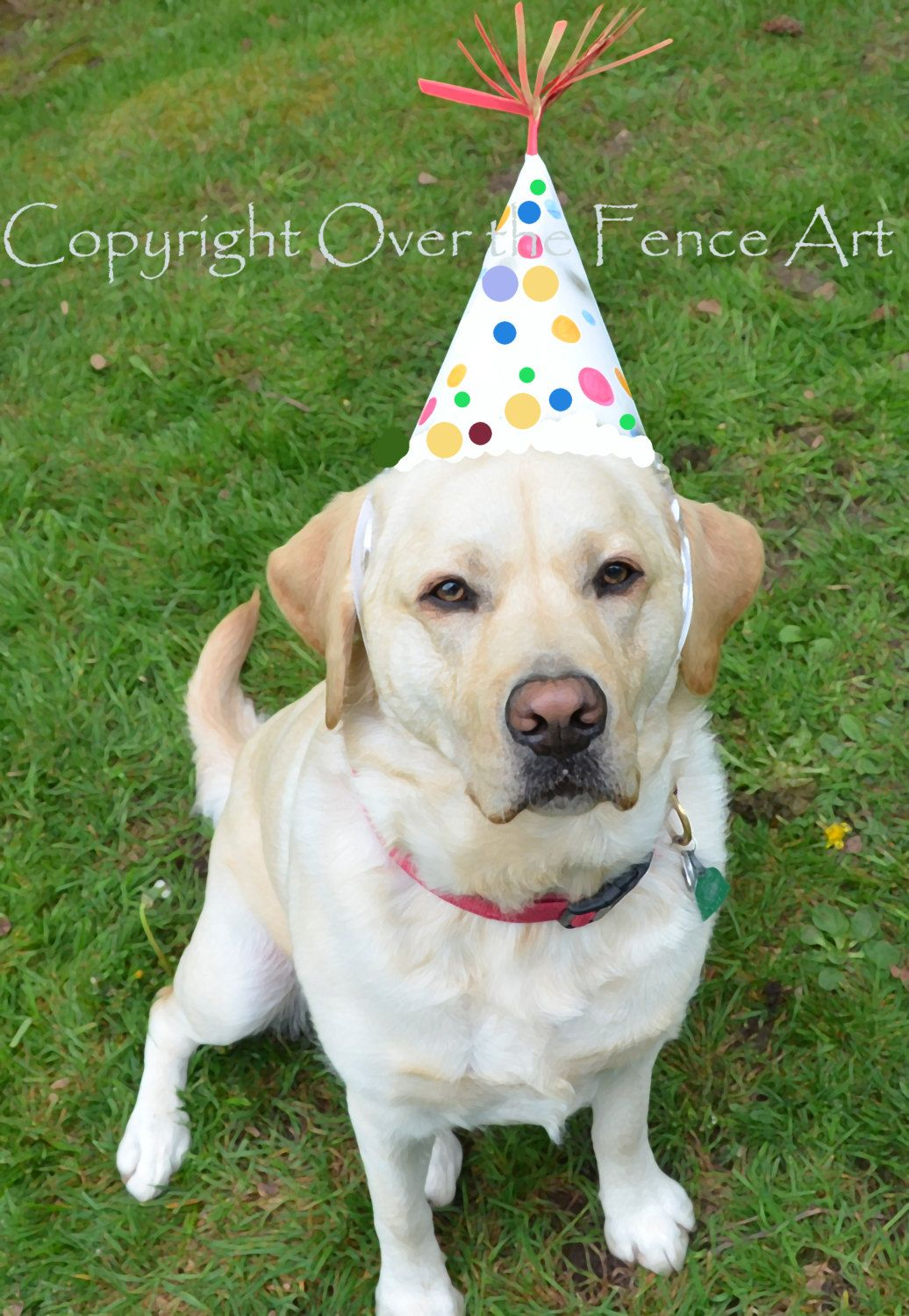 Dog Birthday Card YELLOW LABRADOR PUPPY With Happy Wishes Greeting Portrait Art By Overthefenceart On Etsy