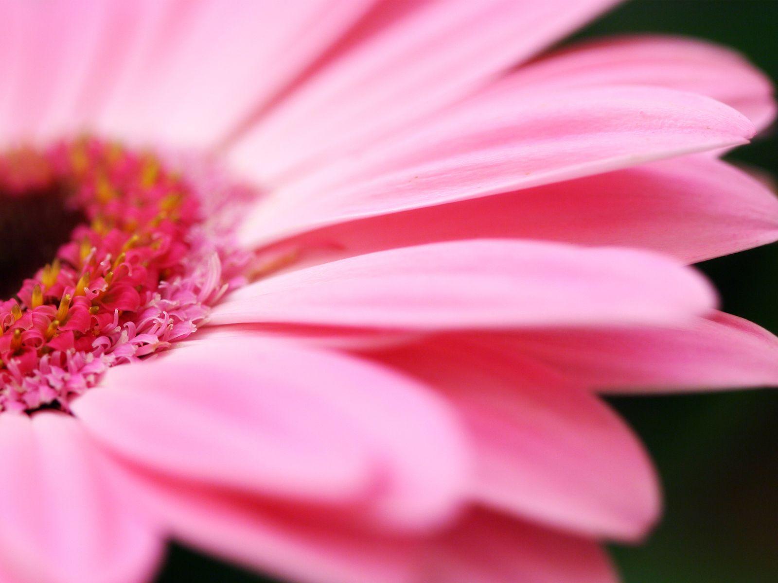 My pink world pink pinterest flowers my pink world izmirmasajfo