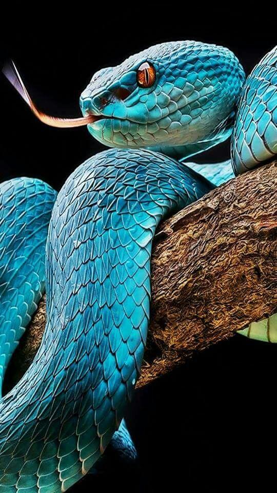 Pin Von Katja Berger Auf Animals Schone Schlangen Reptilien Und Amphibien Tiere