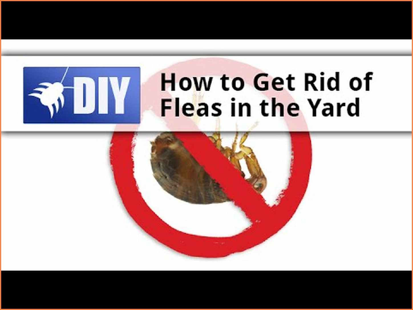 How To Get Rid Of Fleas In Backyard | Fleas, How to get ...