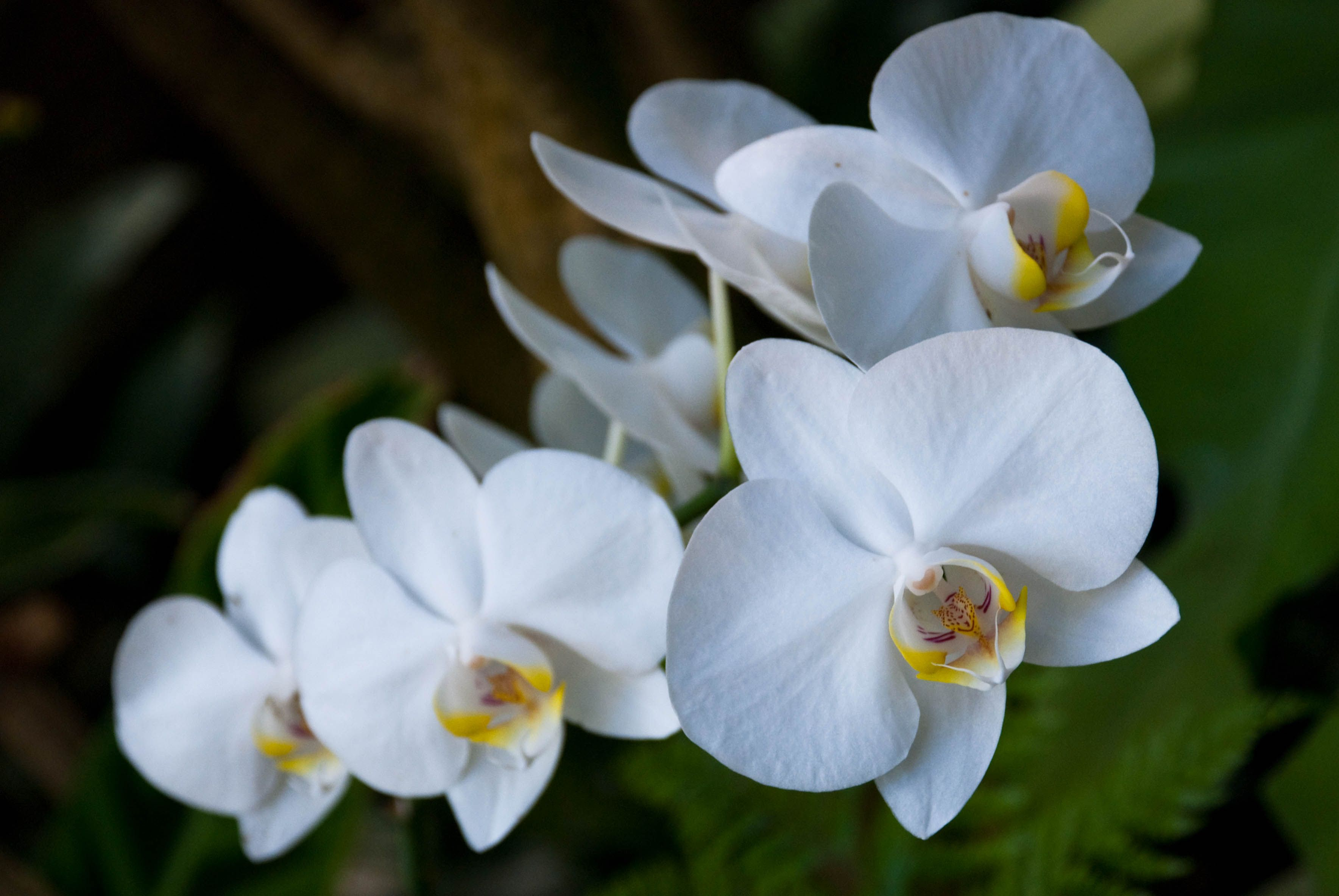 Orchids look amazing love pinterest orchid flowers and