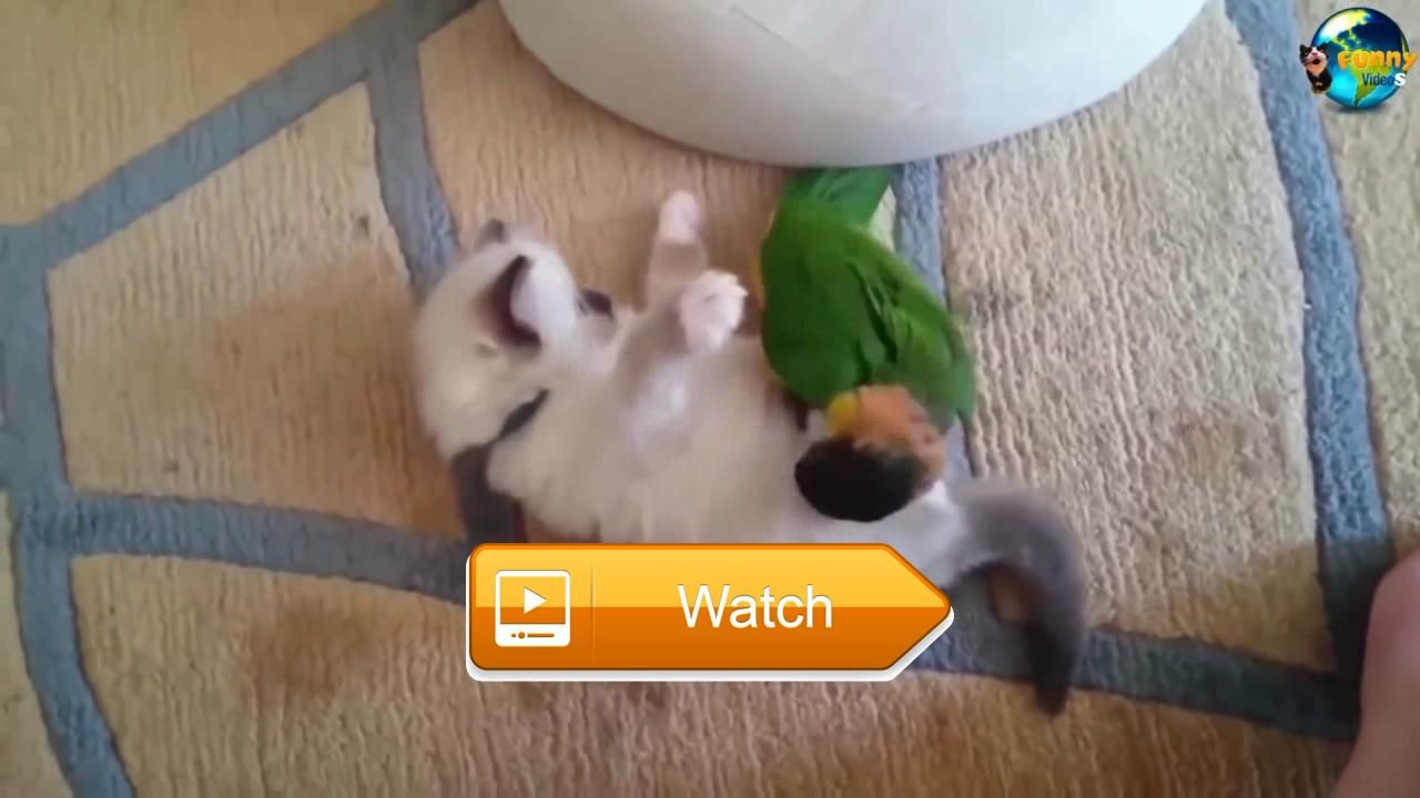 TOP Funny Cat and Dog Dancing and Singing in the World clip