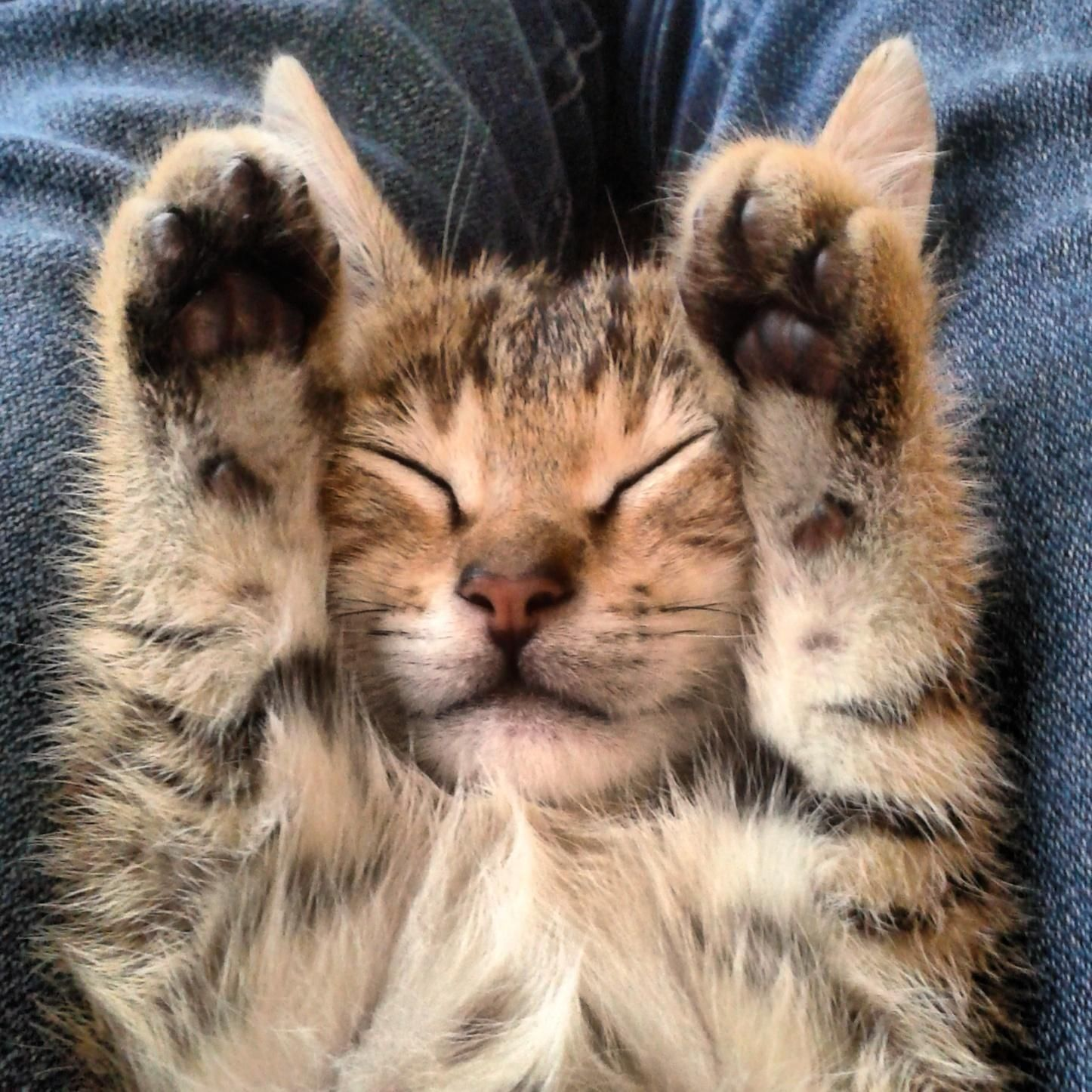 Is it Friday yet? Happy cat, Girl cat names, Cats