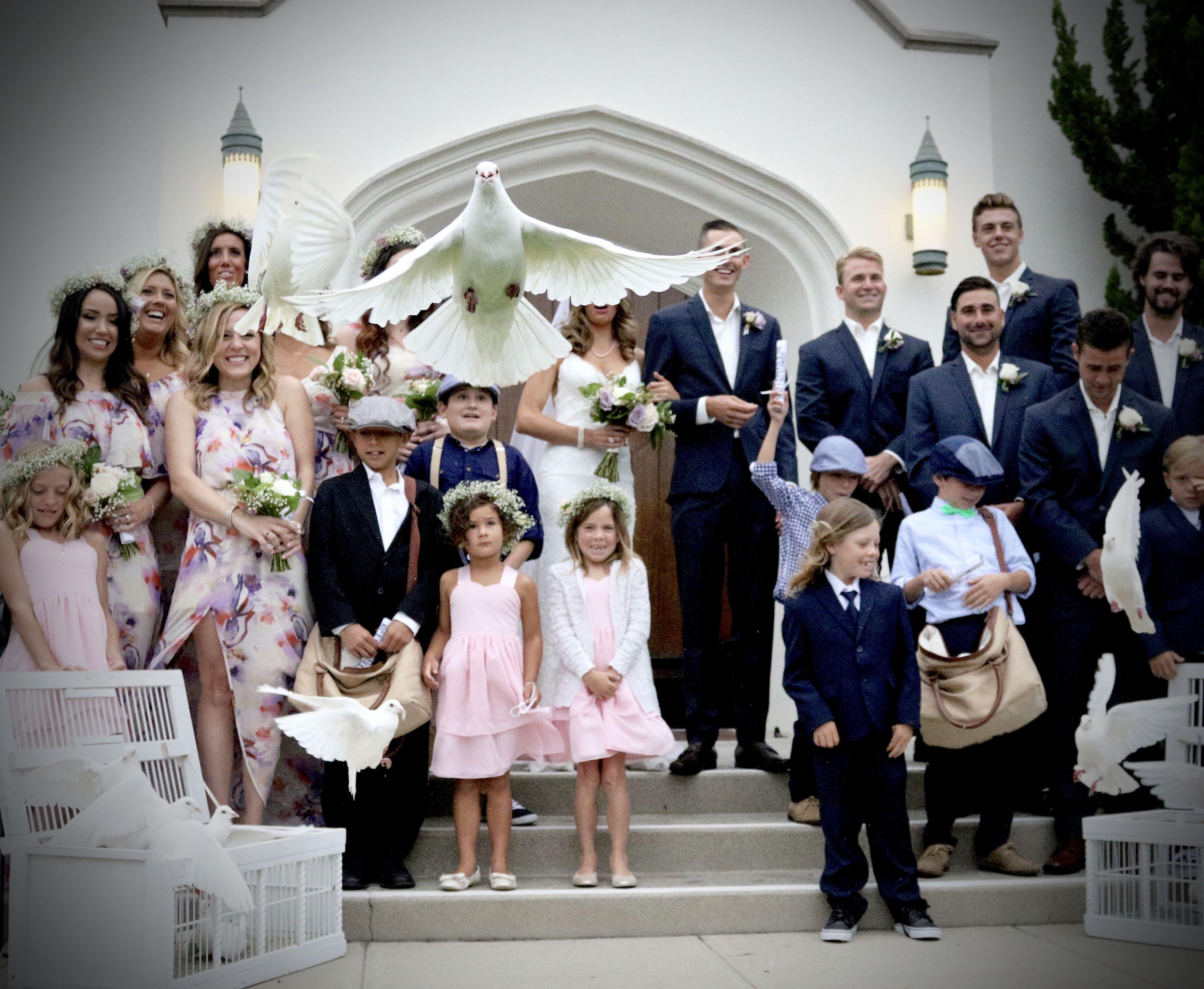 Https Ocdoves Wedding Dove Release In California