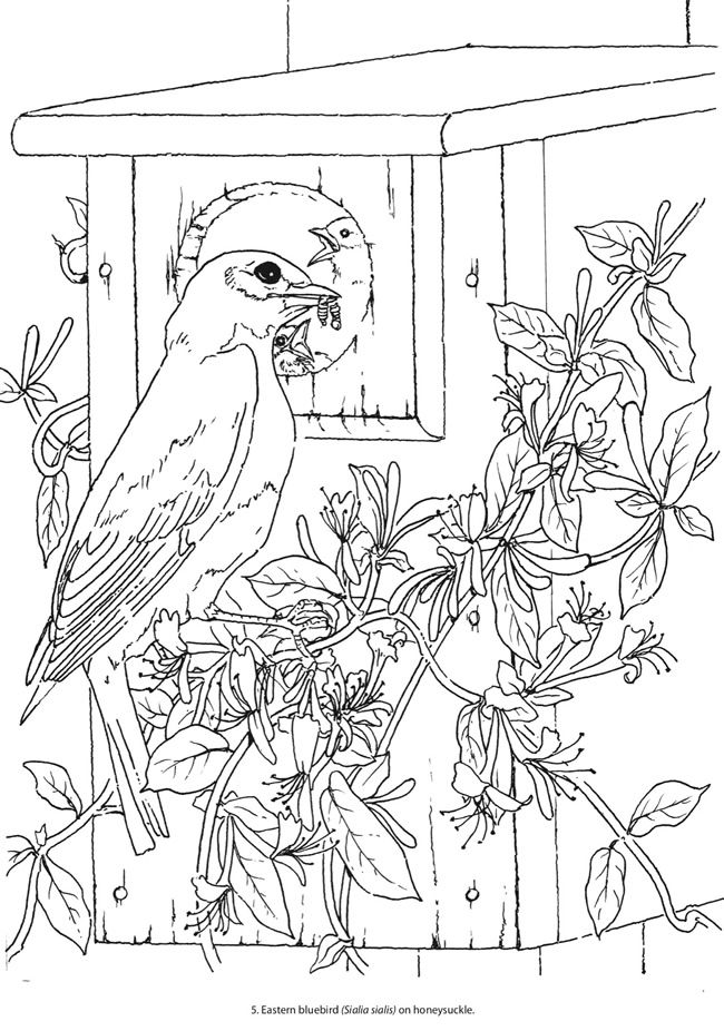Creative Haven Beautiful Birds Coloring Book SAMPLE PAGE 1 Welcome To Dover Publications