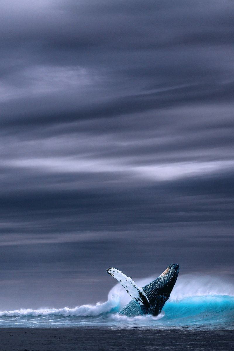 Exquisitecoasts Whale Pictures Beautiful Sea Creatures Ocean Creatures