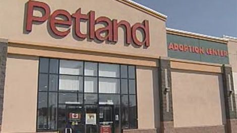 Petland  to stop selling puppies and Kittens in Canadian Stores !!!!