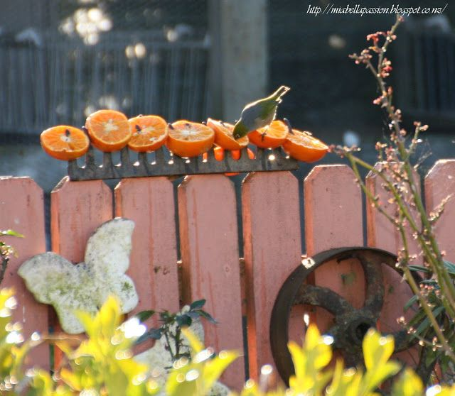 Mia Bella Passions: Rake Head Bird Or Butterfly Feeder Using Fresh Fruit for our feathered friends. #Birds