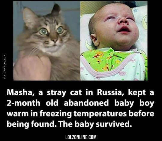 for everyone who says cats are evil funny lol lolzonline tap the