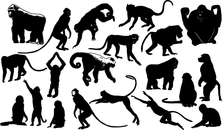 Monkey Silhouettes African Baboon Chimpanzee Forest Gorilla Jungle Mammal Monkey Nature Orangutan Silhouette Vector Silhouette Animal Illustration