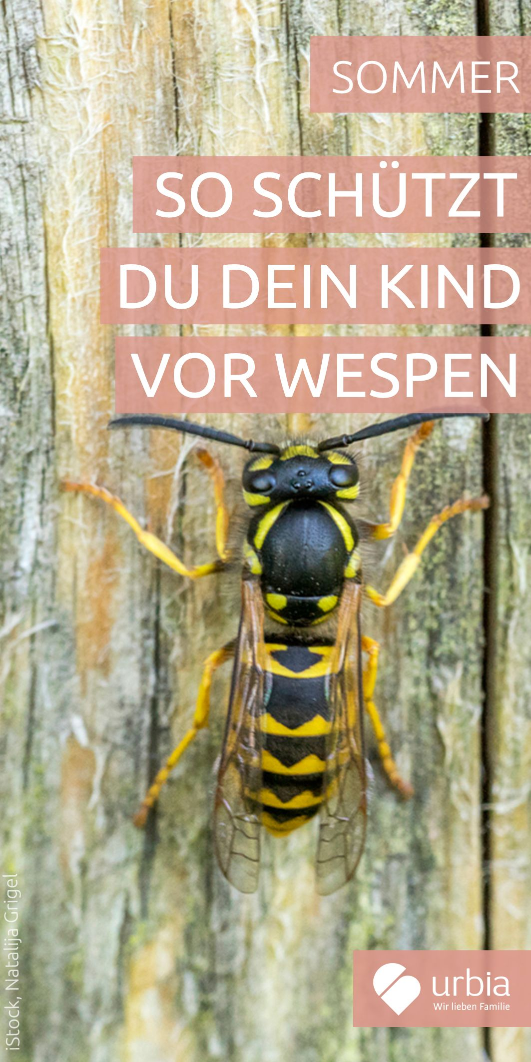 Wespen-Plage: So schützt du dein Kind | Pinterest