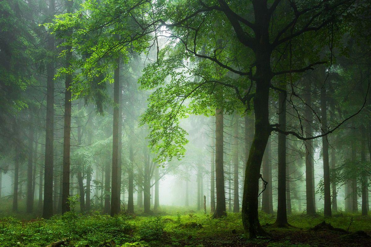 Картинки осеннего леса высокое разрешение горла