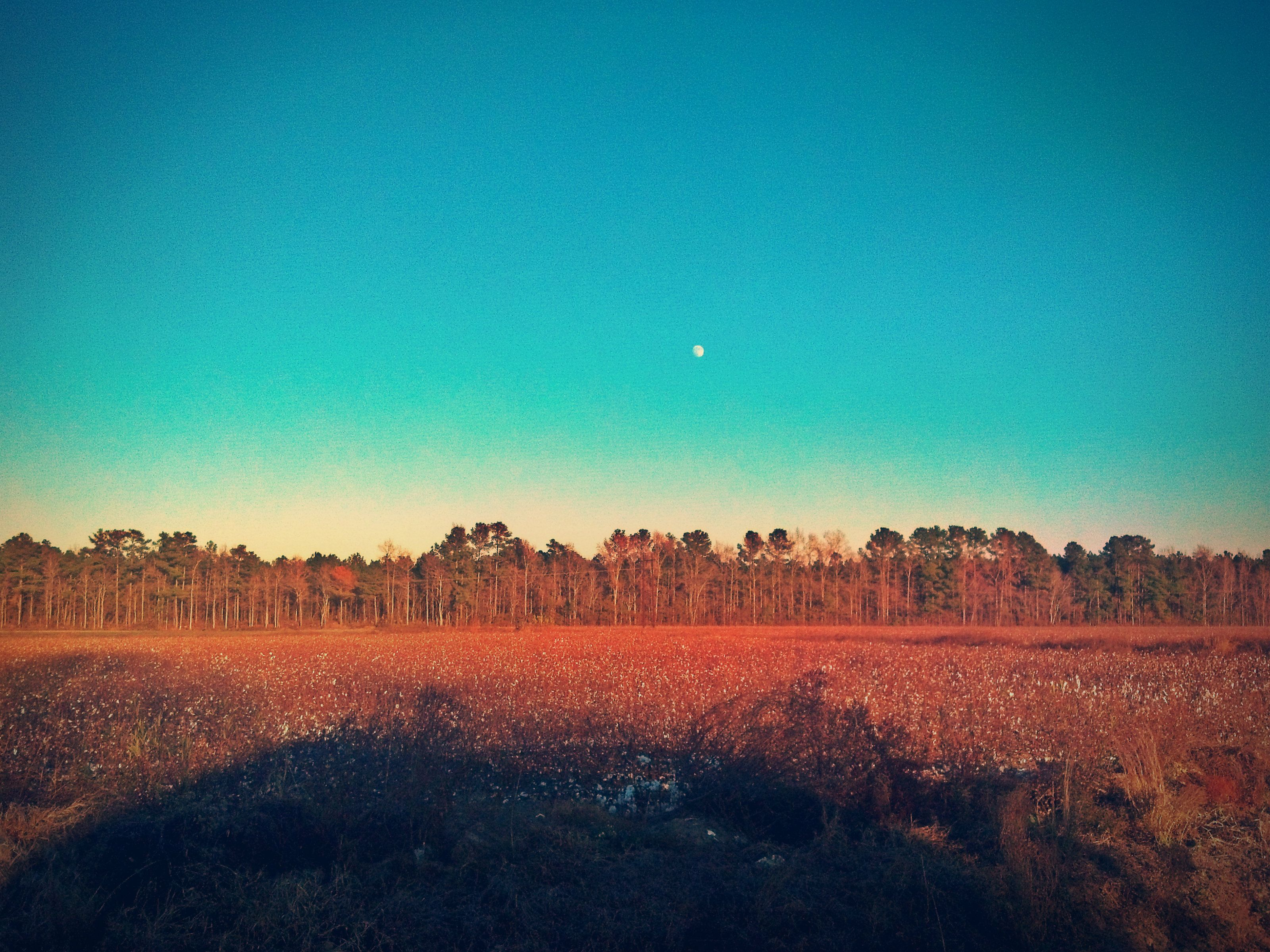 North carolina lumberton robeson county saddletree country