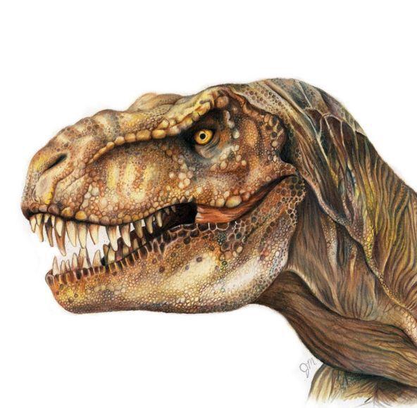 t rex drawing pictures en 2018 pinterest jurasico