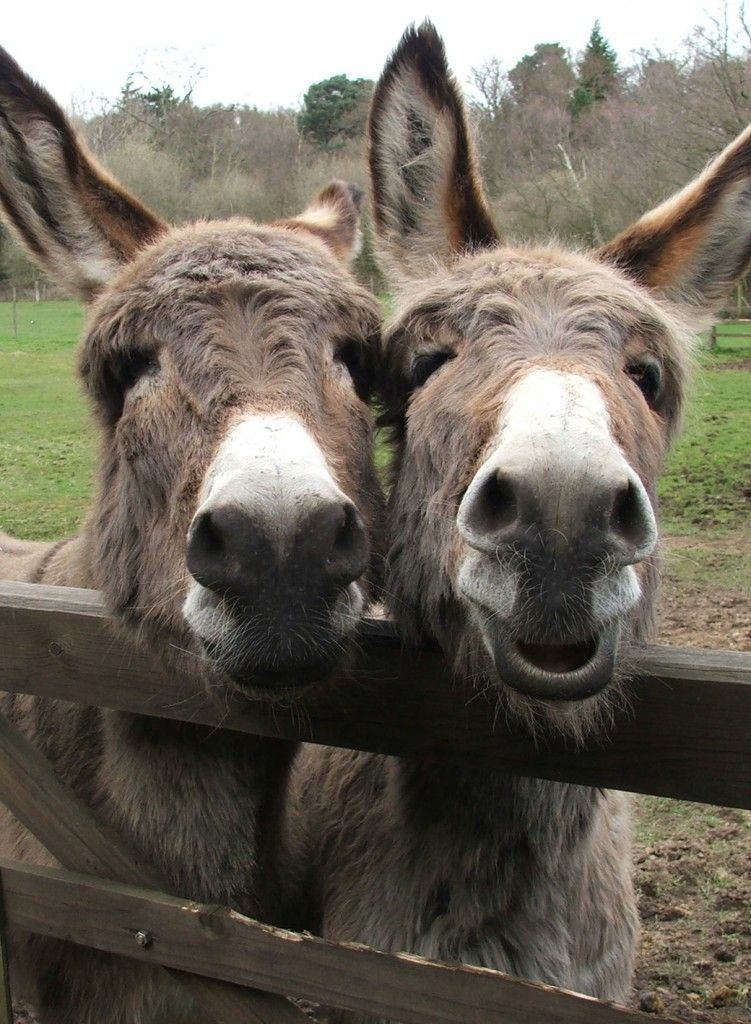 In the UK, Ireland and parts of Europe, THE DONKEY SANCTUARY as an ...