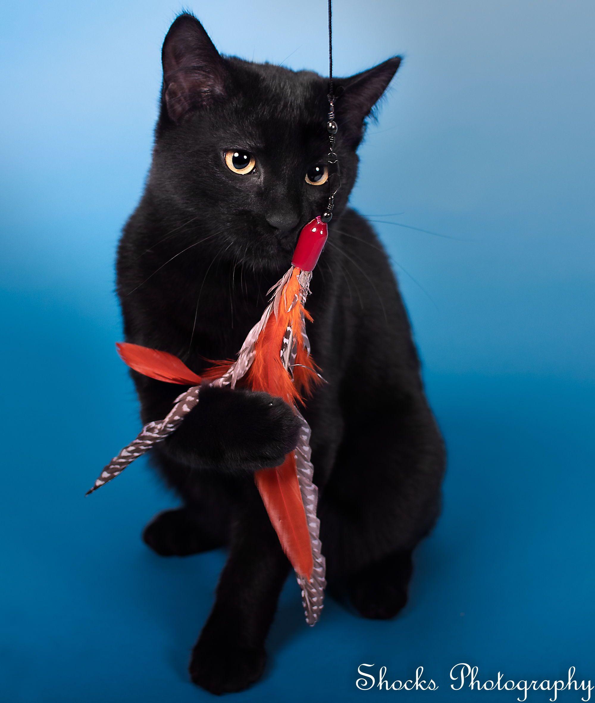 Black Cat Cat Cat Photos Kitten Black Kitten Funny Kitten In 2020 Kittens Cutest Cute Cats And Kittens Cat Photography
