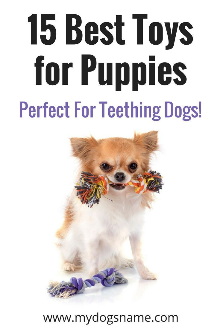 15 Best Chew Toys For Puppies Perfect For Teething Dogs Best
