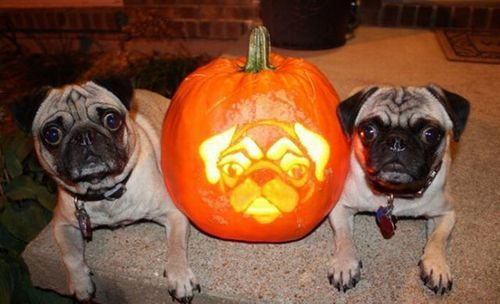 Happy Pug'oween!!