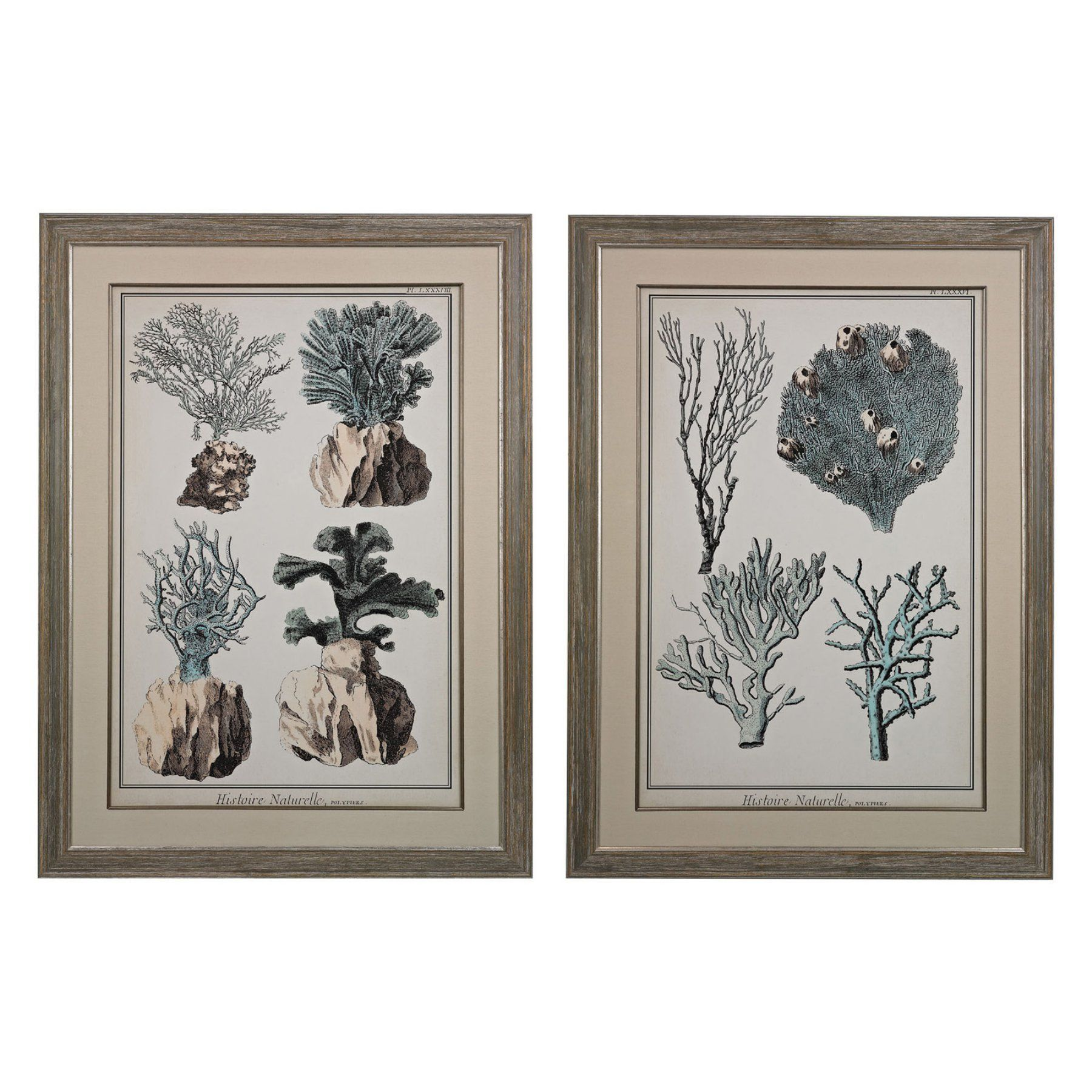 Sterling oversized coral species i ii wall art set of
