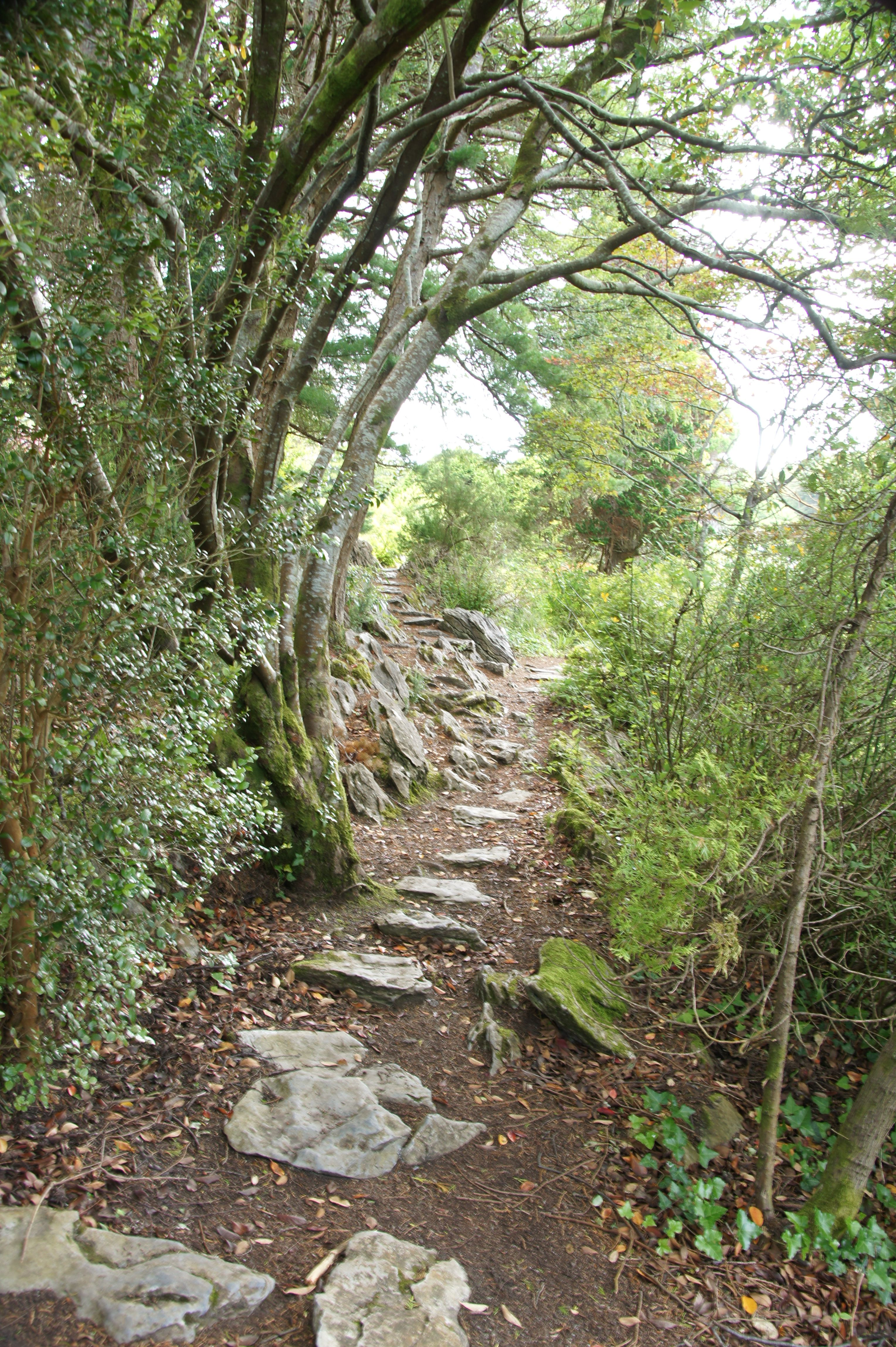 Ireland Kerry - I would LOVE to be going for a walk on this path!