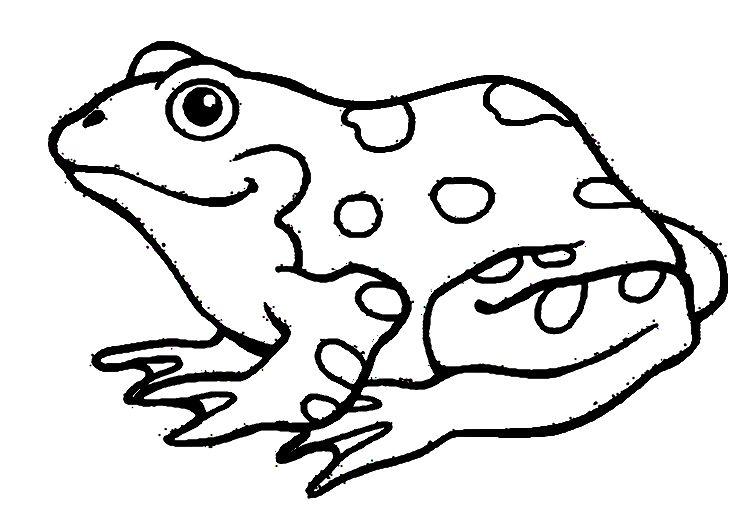 nice Amphibian Coloring Pages Larakroemer Net Mcoloring
